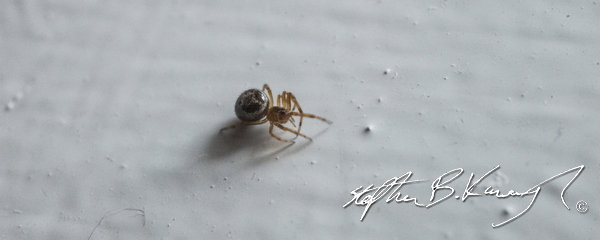 A spider near the window. Leinster Road, Rathmines, Dublin, Ireland. 7th October 2014